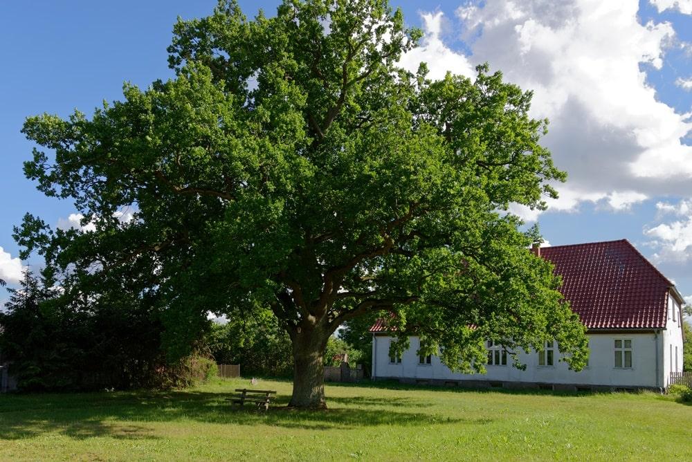 Altes Pfarrhaus an der Pastoreiche in Iven
