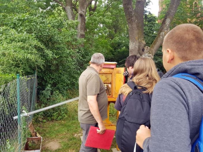 Informatives zu Bienen im Naturpark Flusslandschaft Peenetal