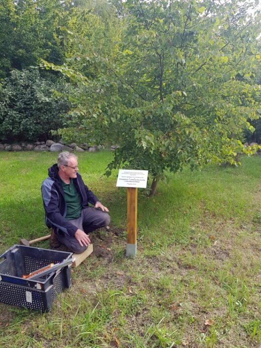 Gedenktafel vor dem Lindenbaum in Krusenfelde-Gramzow